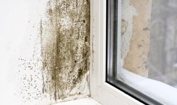 Сырость возле окна