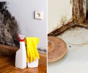 Как выводить грибок на стенах в квартире — простые способы!