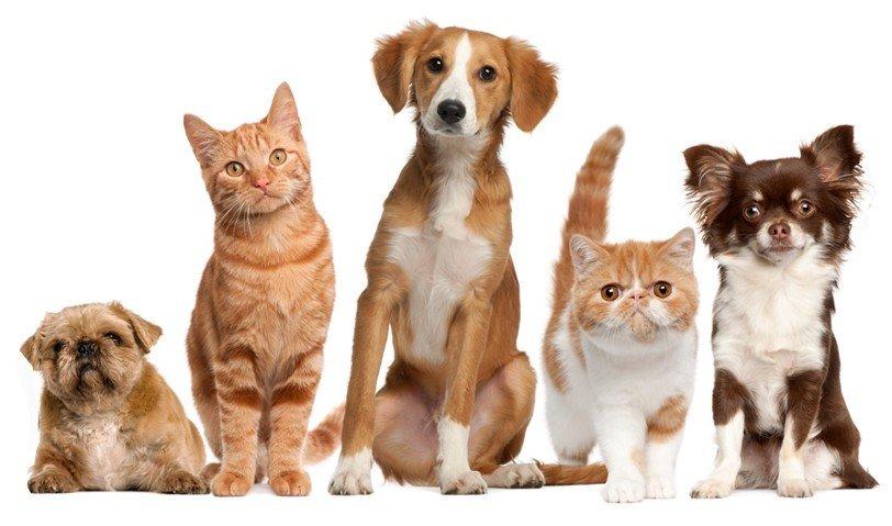 Налог на домашних животных.