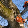 Можно ли спилить дерево на своем участке?