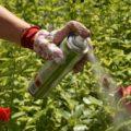 5 основных растений за которые в России можно получить тюремный срок.