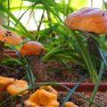 Почему не следует выращивать грибы в домашних условиях?