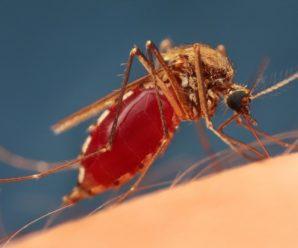 Почему комары одних кусают чаще нежели других?