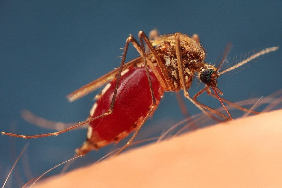 Причины укуса комара