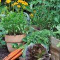 Овощные культуры, которые хорошо растут в тени.