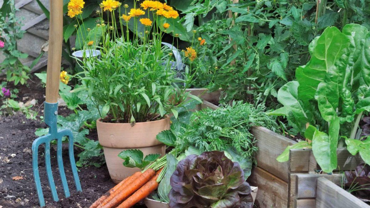Тенелюбивые культуры для огорода