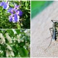 Выращивание этих растений поможет избавиться от комаров на своем участке.