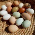 Цвет яичной скорлупы: какая разница между белой и коричневой скорлупой.