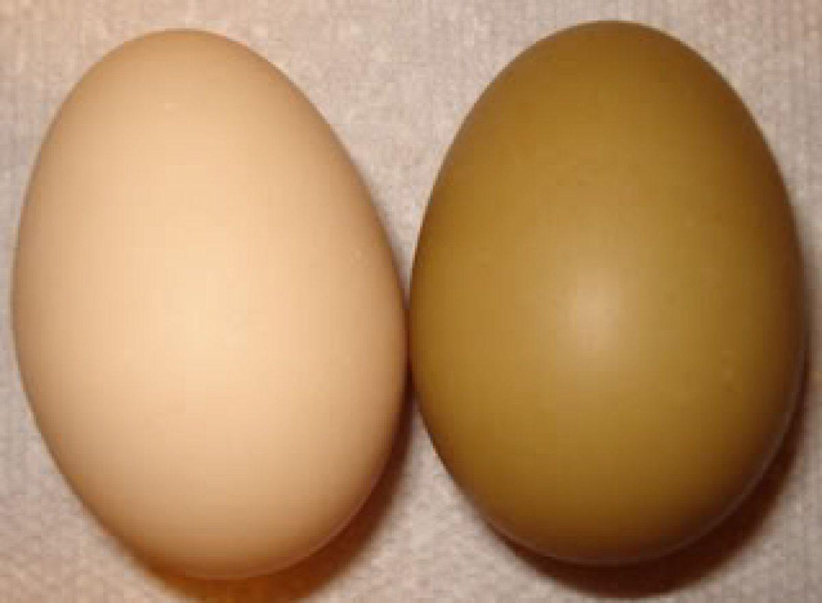 калорийность яиц разных цветов