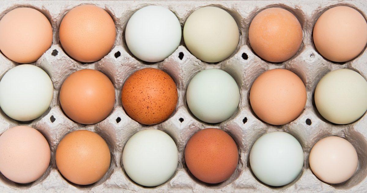 Цвет яиц