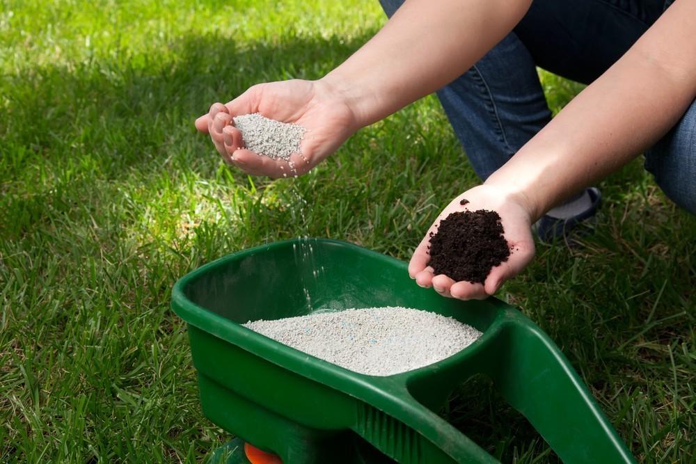 Нужною ли поливать газон после удобрения