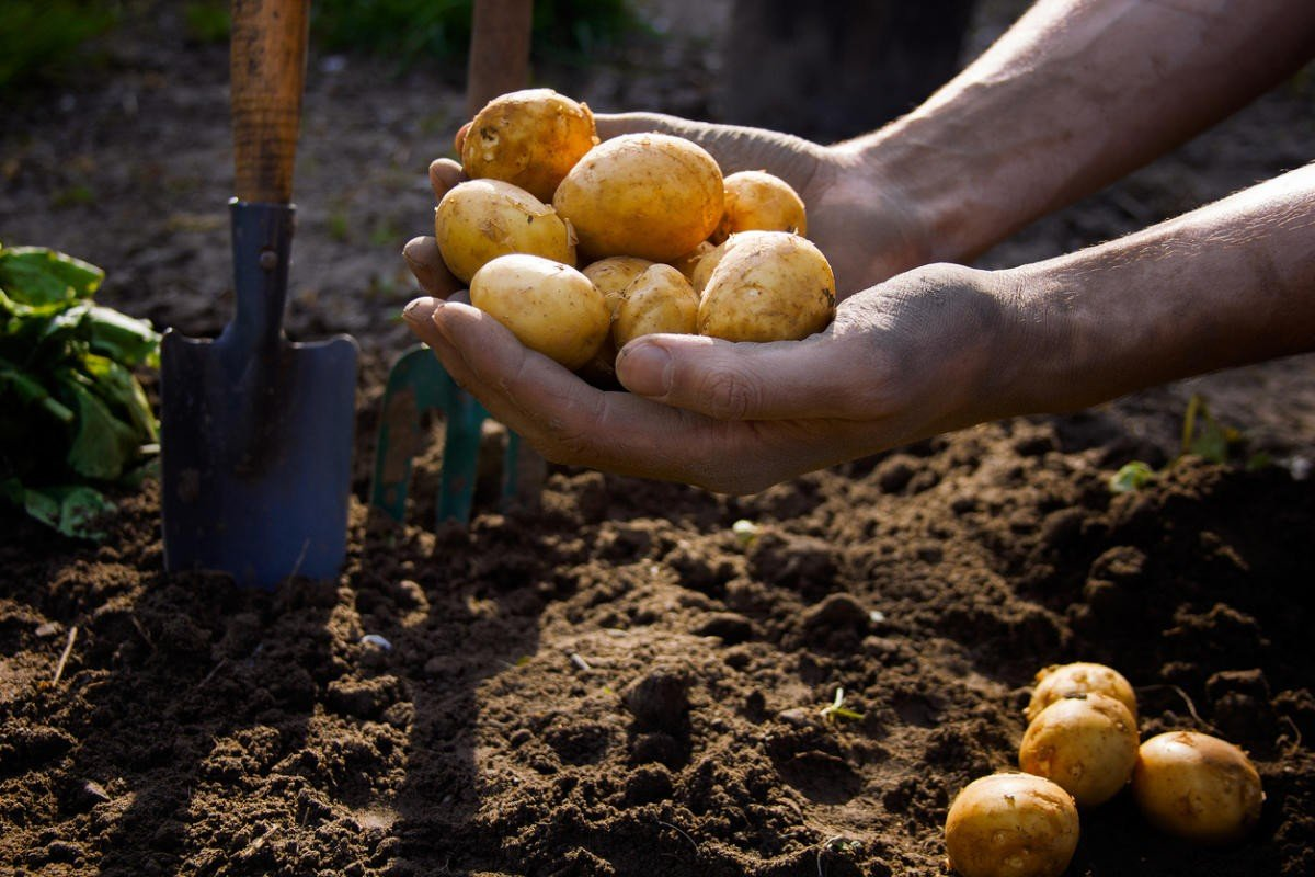 Закон о запрете выращивании картошки