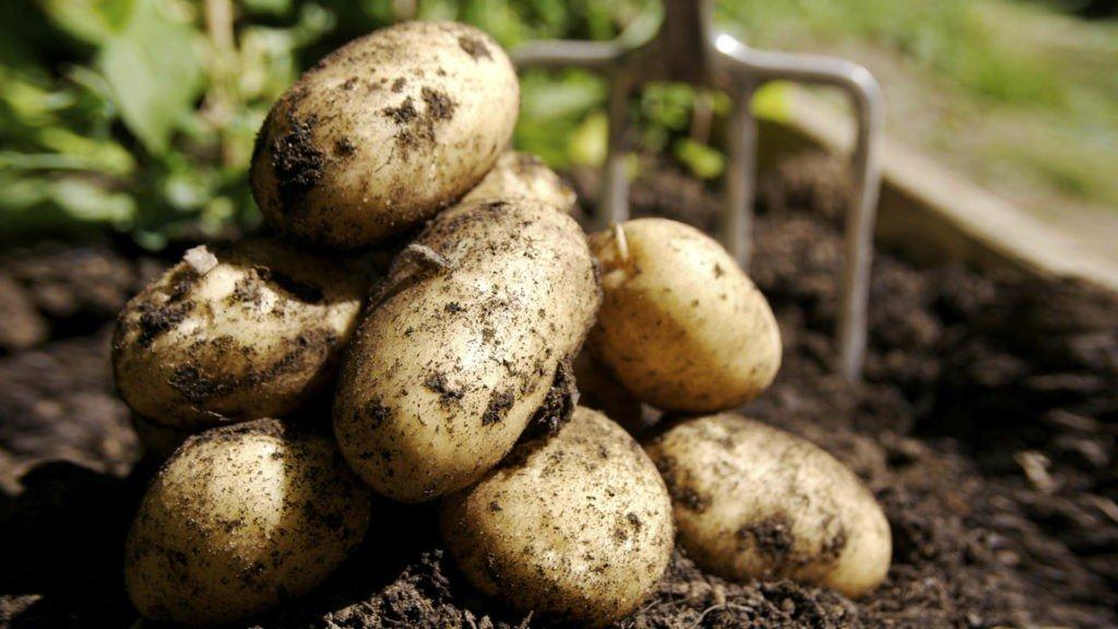 Запрет на картошку