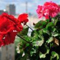 Домашние (комнатные) растения которые медленно отравляют вас и ваших питомцев.