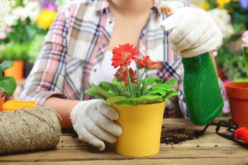 надо ли перед подкормкой поливать растения