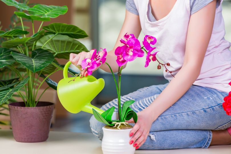 Чем поливают цветы в магазинах, доставка