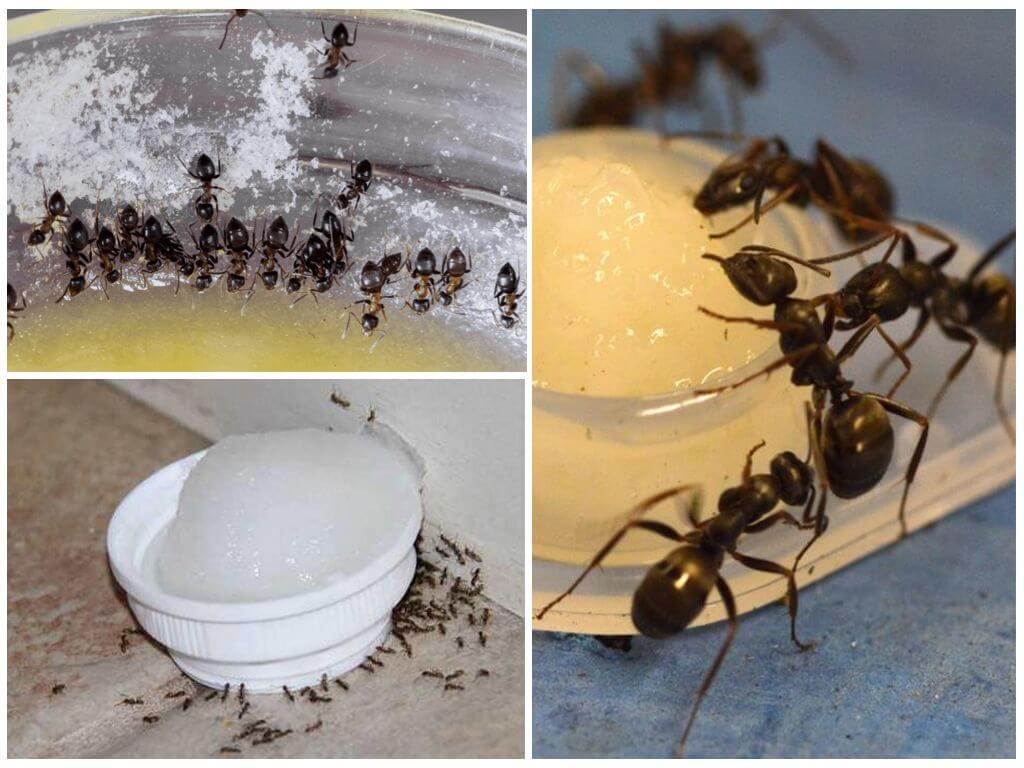 Как вывести муравей из дома