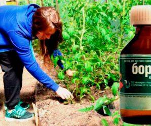 Когда и каким растениям необходима подкормка с борной кислоты.