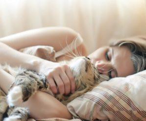 Ученные рассказали почему спать в одной кровати вместе с котом опасно.