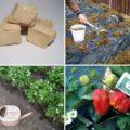 Какие растения можно подкормить дрожжами, а какие нельзя.