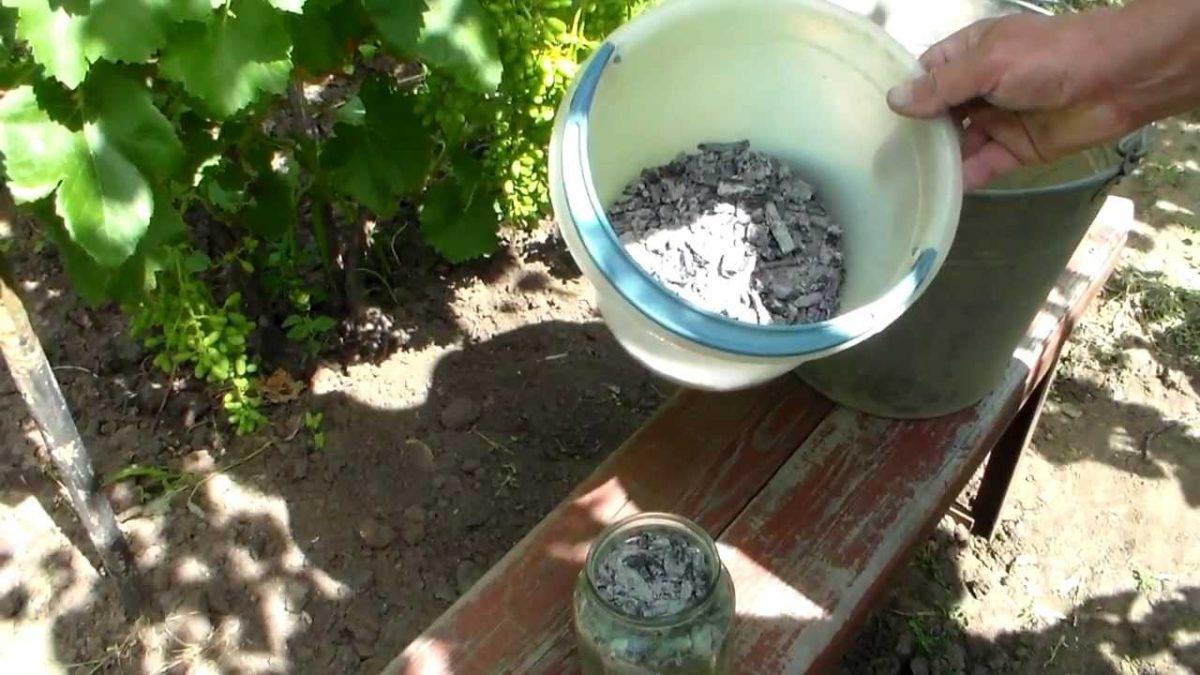 Подкормка для винограда