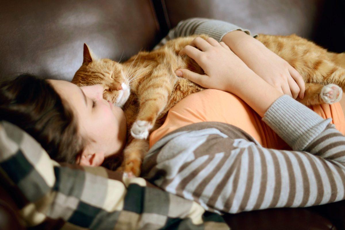 Почему коты спать на людях