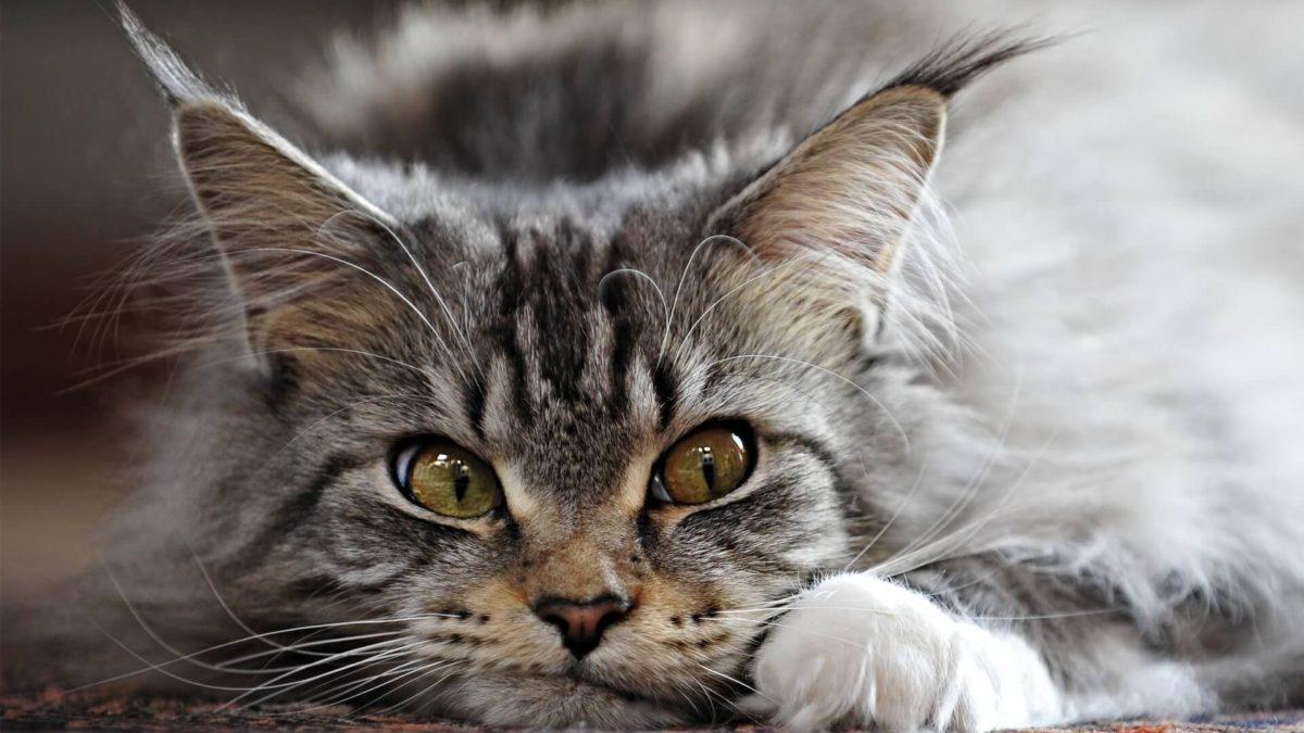 Негатив в доме, как это видит кот