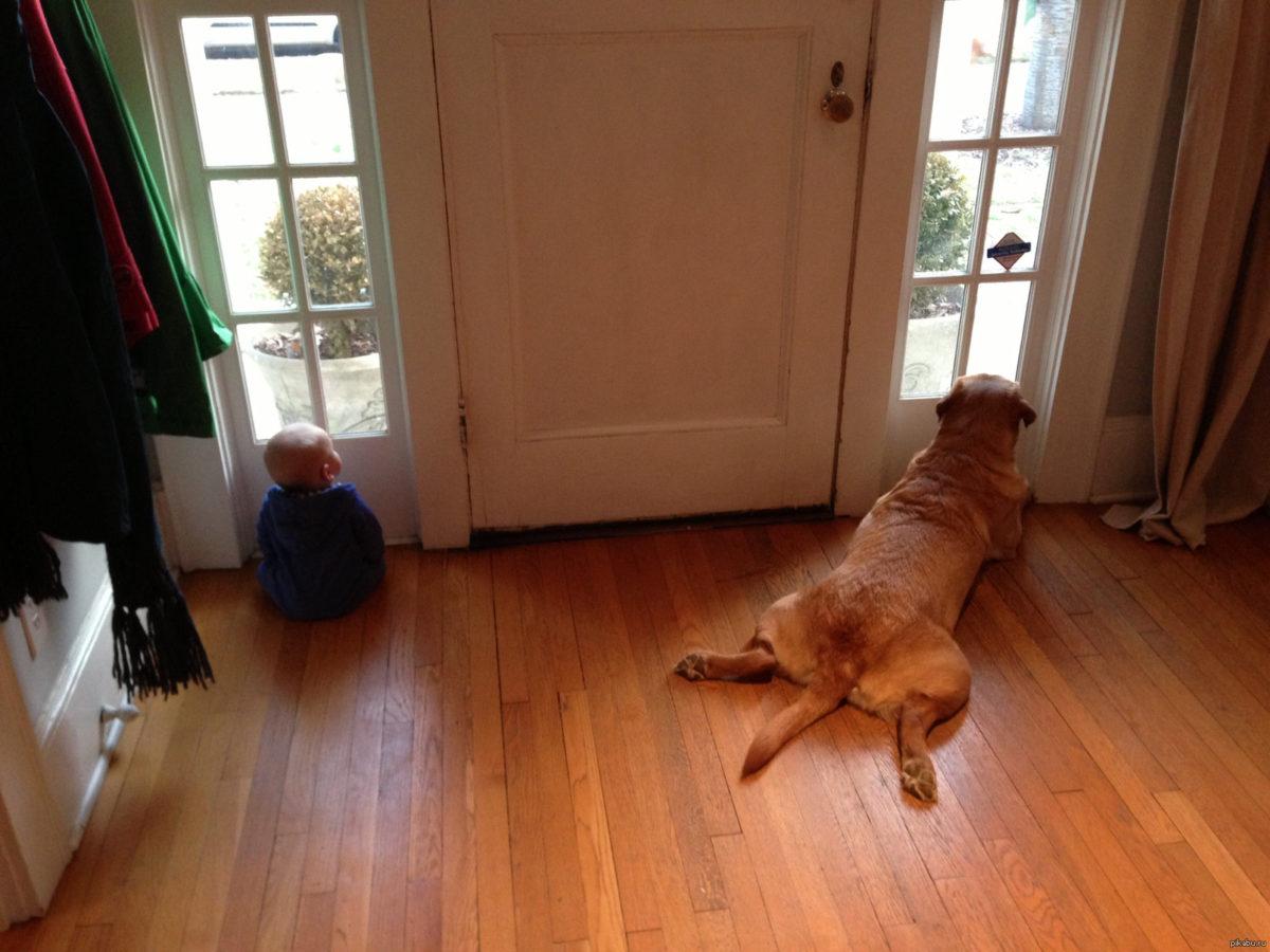 Собака возле двери