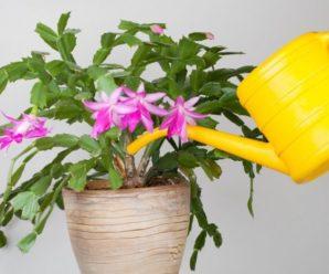 Чем лучше поливать комнатные цветы, чтобы быстро росли и красиво цвели