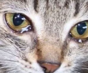 Почему у кошки слезятся глаза и нужно ли что-то предпринимать в этом случае?