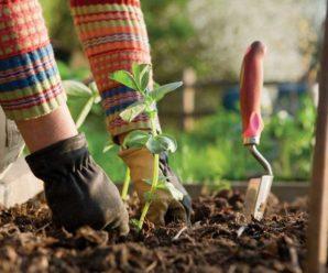 Что можно сажать осенью на своем участке что бы уже весной получить урожай