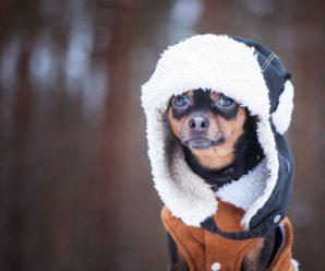 Нужна ли собакам одежда? Какие породы нужно обязательно одевать