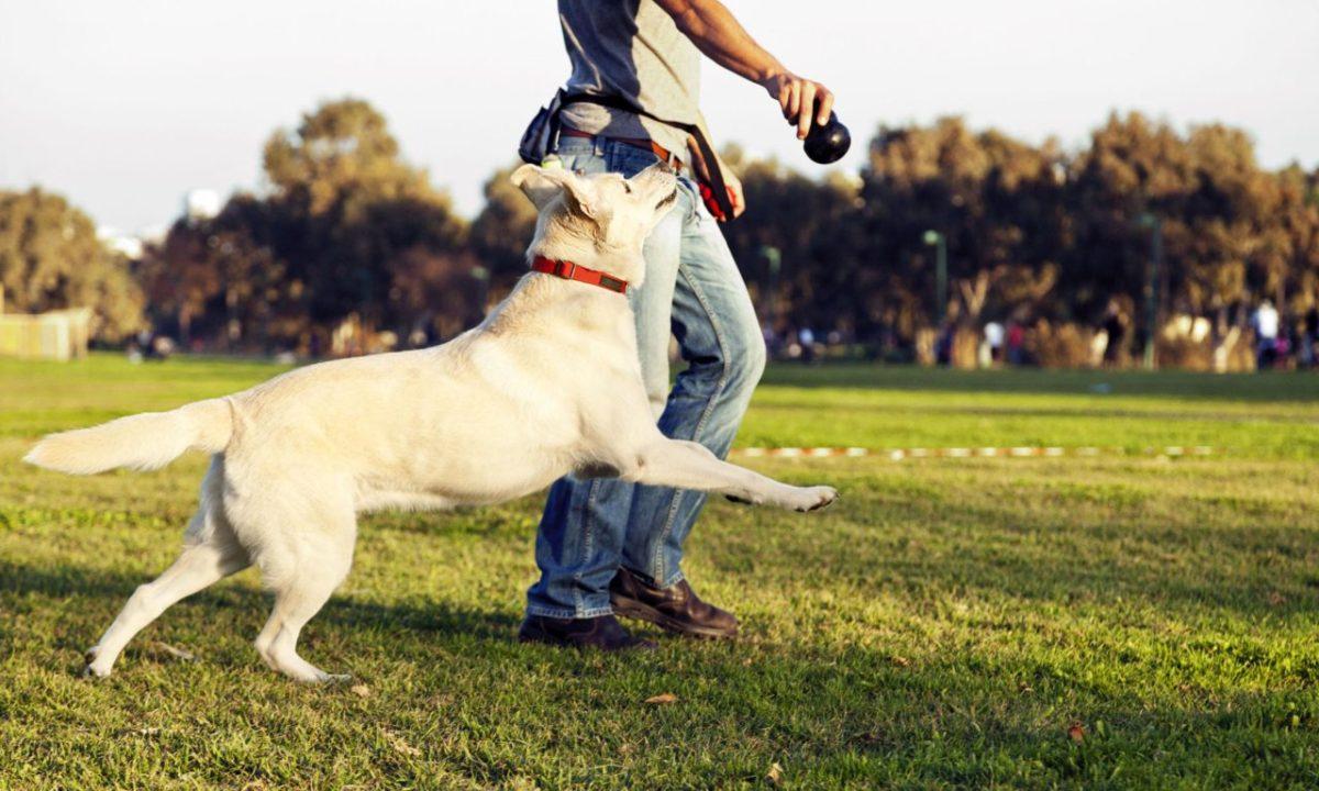 Можно ли от домашней собаки заразиться глистами?