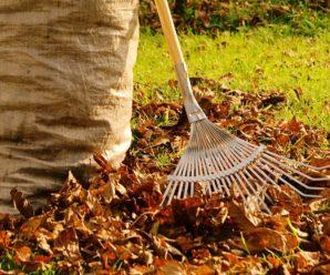 Нужно ли убирать опавшие листья в саду?