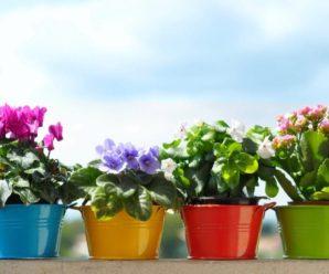 Какие комнатные растение цветут круглый год и не требуют особого ухода