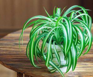 Список комнатных растений которые прекрасно очищают воздух