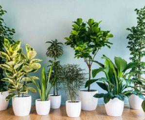 Причины по которым в доме не приживаются растения