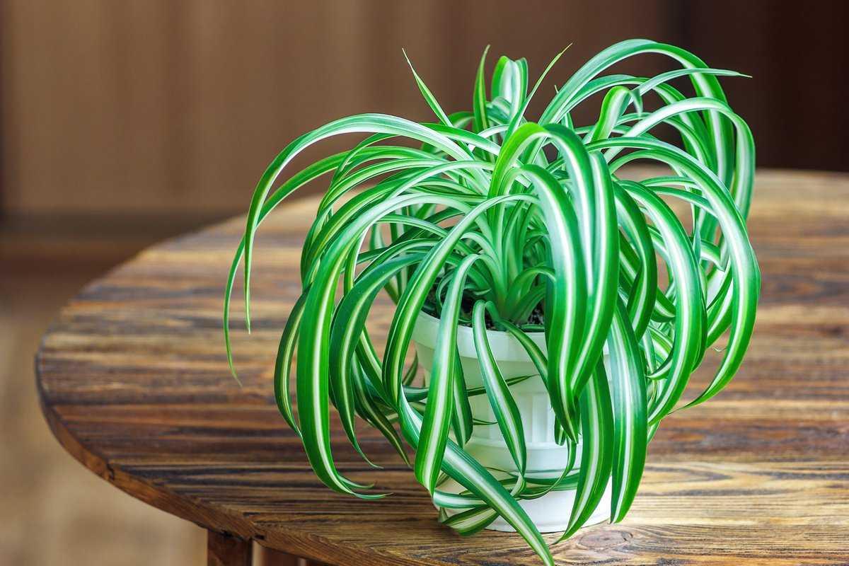 Комнатные растения которые очищают воздух в доме