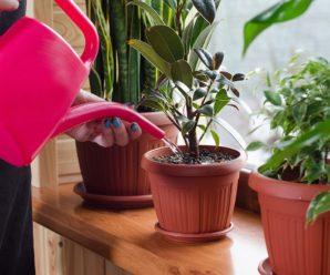 Основные правила ухода за комнатными растениями зимой