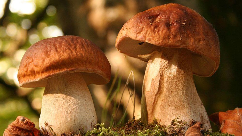 Лесной гриб