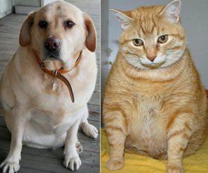 Домашние животные и ожирение. Что нужно знать!