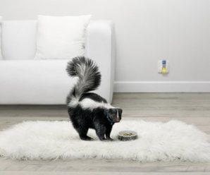Топ-10 натуральных средств для устранения неприятных запахов в доме