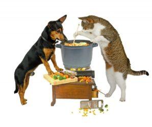 Как правильно кормить кошек и собак влажным кормом?