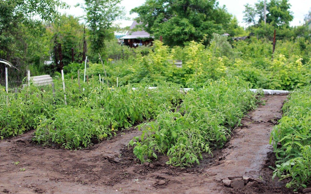 Налог на огород