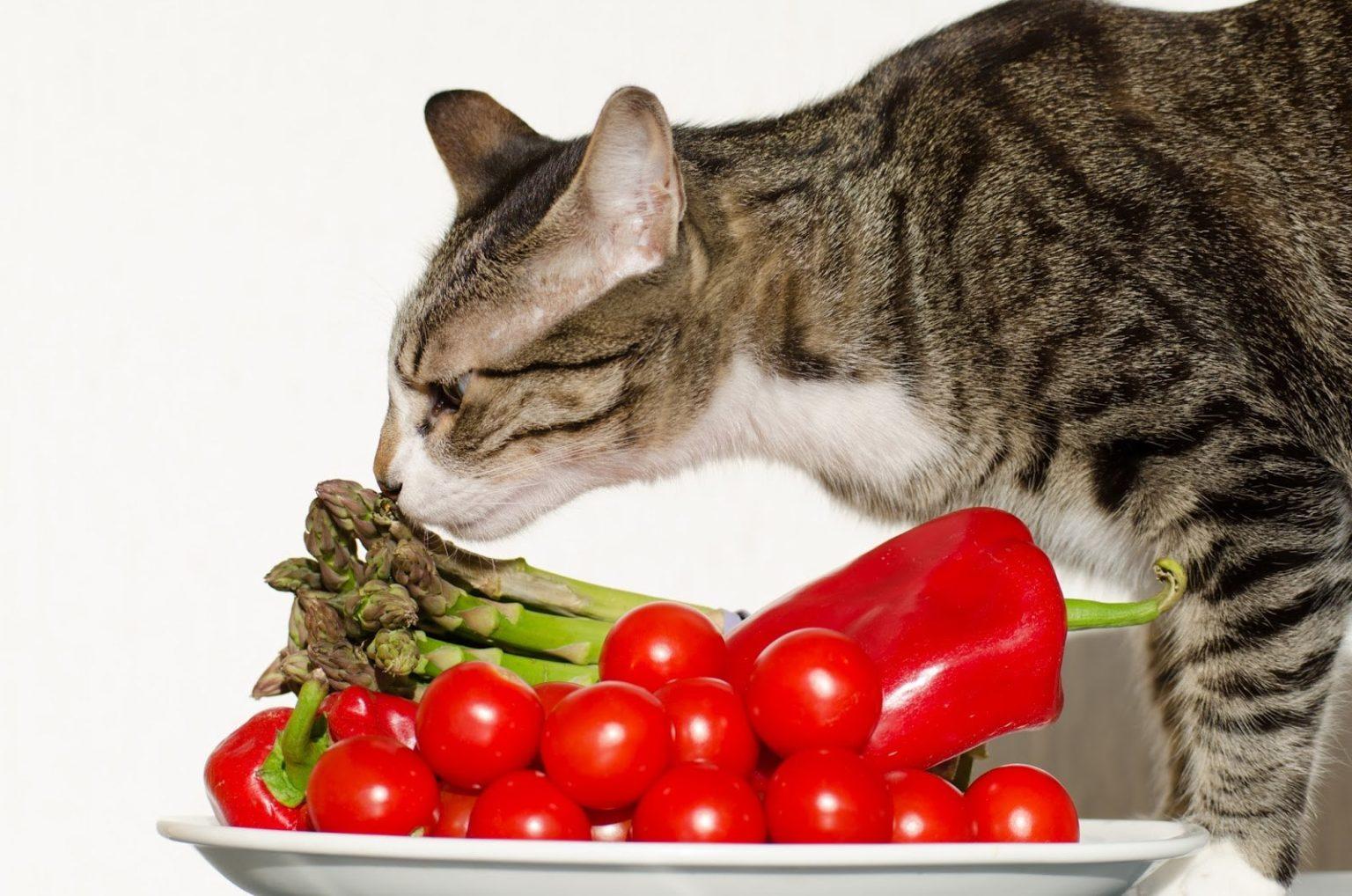 Витамины для кота