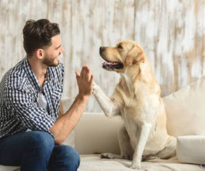 Топ-10 важных советов по воспитанию собаки