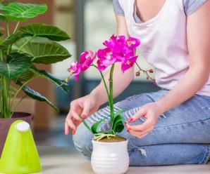Как ухаживать за комнатными растениями? 5 основных правил