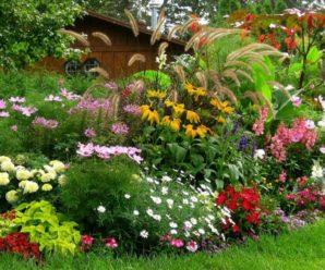 Топ-10 многолетних цветов цветущих все лето