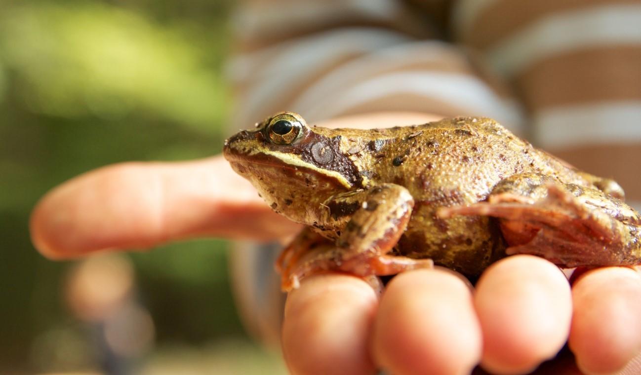 Жаба на участке