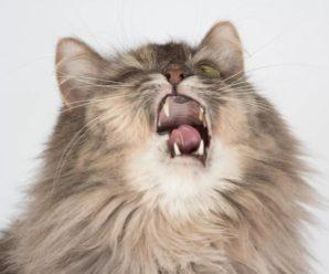 От чего чихает кошка? — всевозможные причины